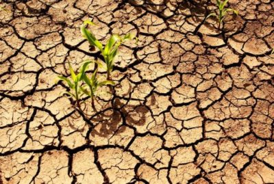 Soils Bulletin header
