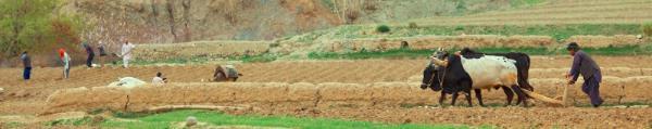 Soils2015