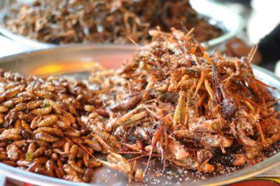 crickets_0